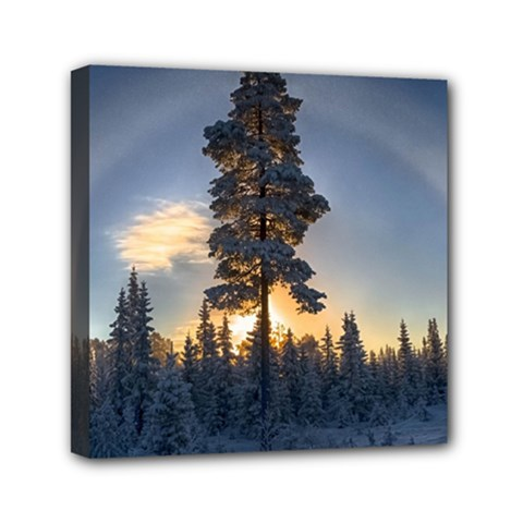 Winter Sunset Pine Tree Mini Canvas 6  X 6  (stretched)