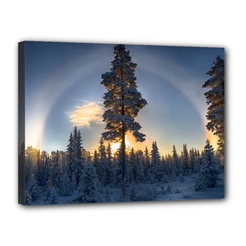 Winter Sunset Pine Tree Canvas 16  X 12  (stretched)
