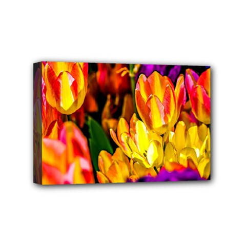 Fancy Tulip Flowers In Spring Mini Canvas 6  X 4  (stretched) by FunnyCow