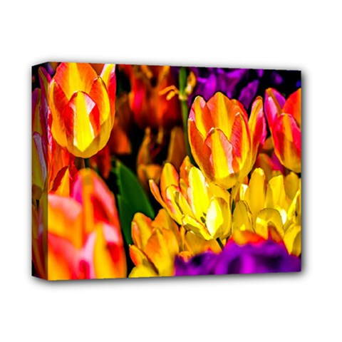 Fancy Tulip Flowers In Spring Deluxe Canvas 14  X 11  (stretched) by FunnyCow