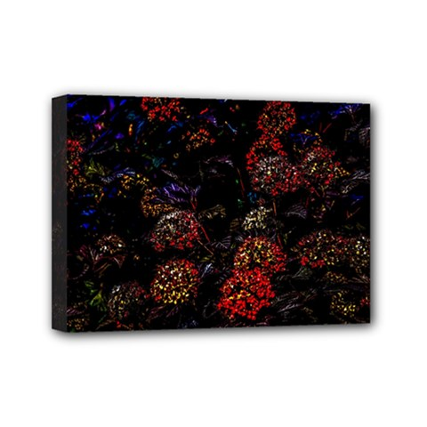 Floral Fireworks Mini Canvas 7  X 5  (stretched)