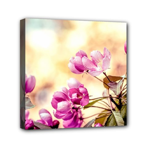 Paradise Apple Blossoms Mini Canvas 6  X 6  (stretched)