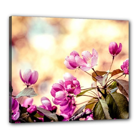 Paradise Apple Blossoms Canvas 24  X 20  (stretched) by FunnyCow