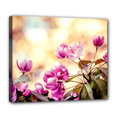 Paradise Apple Blossoms Deluxe Canvas 24  X 20  (stretched) by FunnyCow