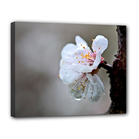 Rainy Day Of Hanami Season Canvas 14  X 11  (stretched) by FunnyCow