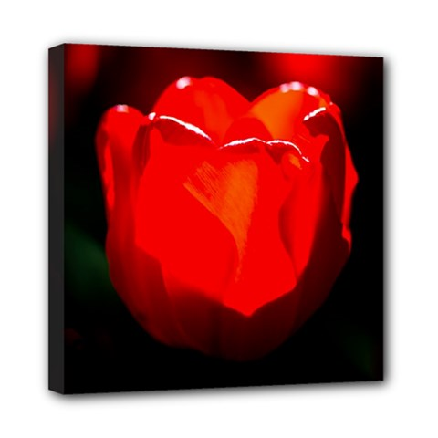 Red Tulip A Bowl Of Fire Mini Canvas 8  X 8  (stretched)
