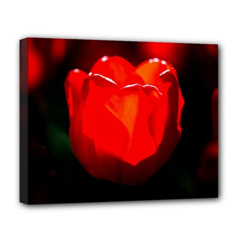Red Tulip A Bowl Of Fire Deluxe Canvas 20  X 16  (stretched)