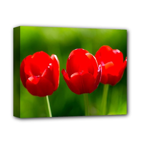 Three Red Tulips, Green Background Deluxe Canvas 14  X 11  (stretched) by FunnyCow