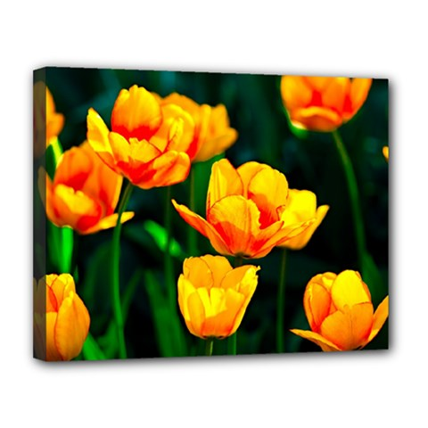 Yellow Orange Tulip Flowers Canvas 14  X 11  (stretched) by FunnyCow