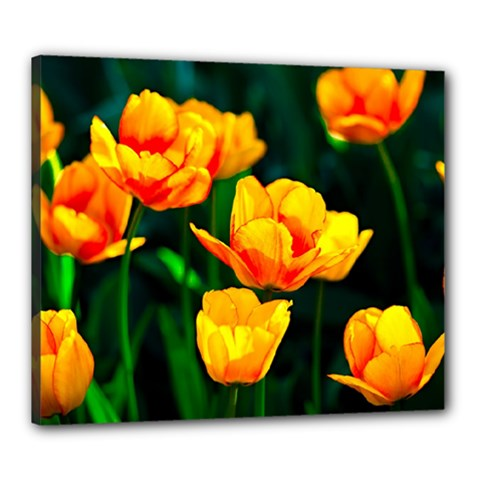 Yellow Orange Tulip Flowers Canvas 24  X 20  (stretched) by FunnyCow
