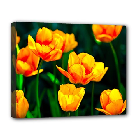 Yellow Orange Tulip Flowers Deluxe Canvas 20  X 16  (stretched) by FunnyCow