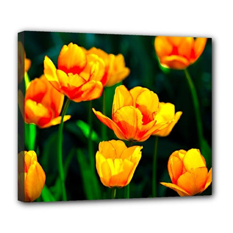 Yellow Orange Tulip Flowers Deluxe Canvas 24  X 20  (stretched) by FunnyCow