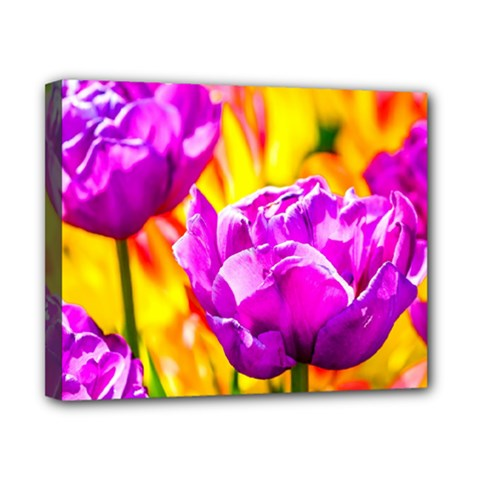Violet Tulip Flowers Canvas 10  X 8  (stretched) by FunnyCow