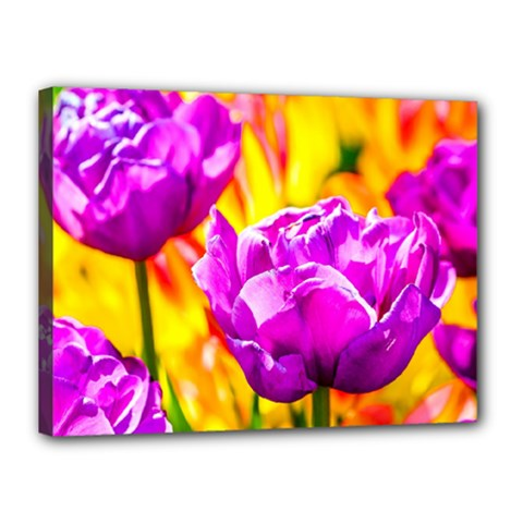 Violet Tulip Flowers Canvas 16  X 12  (stretched) by FunnyCow