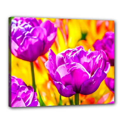 Violet Tulip Flowers Canvas 20  X 16  (stretched) by FunnyCow