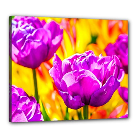 Violet Tulip Flowers Canvas 24  X 20  (stretched) by FunnyCow