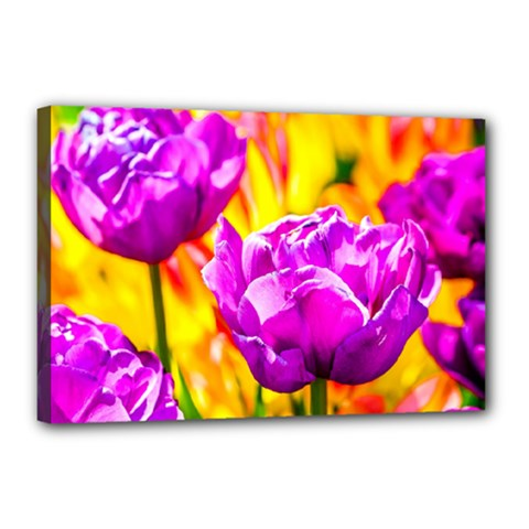 Violet Tulip Flowers Canvas 18  X 12  (stretched) by FunnyCow