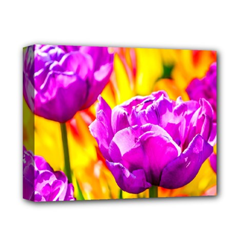Violet Tulip Flowers Deluxe Canvas 14  X 11  (stretched) by FunnyCow