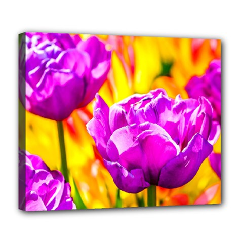 Violet Tulip Flowers Deluxe Canvas 24  X 20  (stretched) by FunnyCow