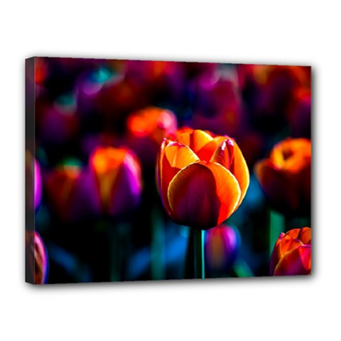 Red Tulips Canvas 16  X 12  (stretched)