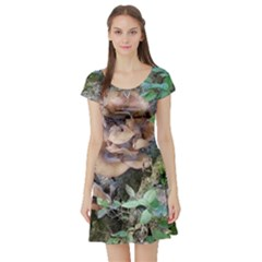 Abstract Of Mushroom Short Sleeve Skater Dress by canvasngiftshop