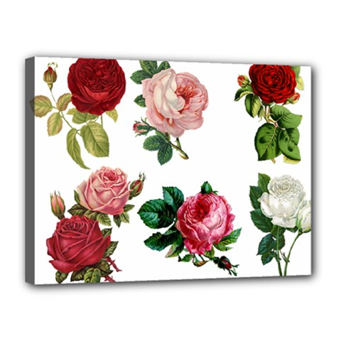Roses 1770165 1920 Canvas 16  X 12  (stretched) by vintage2030