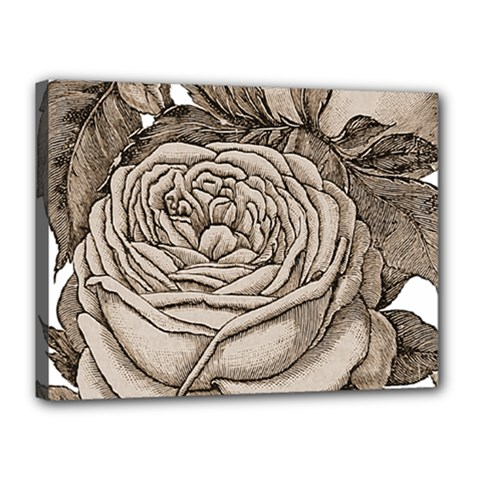 Flowers 1776626 1920 Canvas 16  X 12  (stretched) by vintage2030