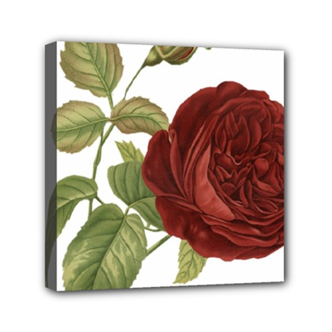 Rose 1077964 1280 Mini Canvas 6  X 6  (stretched) by vintage2030