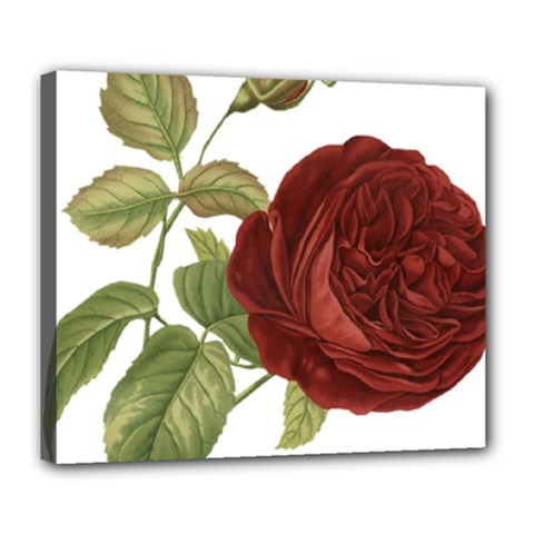 Rose 1077964 1280 Deluxe Canvas 24  X 20  (stretched) by vintage2030