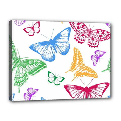 Butterfly Butterflies Vintage Canvas 16  X 12  (stretched)