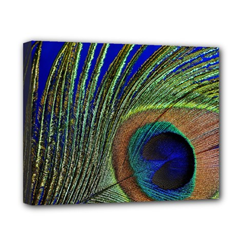 Peacock Feather Macro Peacock Bird Canvas 10  X 8  (stretched)