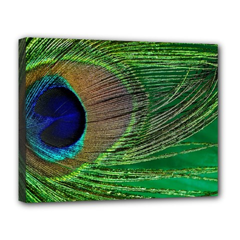 Peacock Feather Macro Peacock Bird Canvas 14  X 11  (stretched)