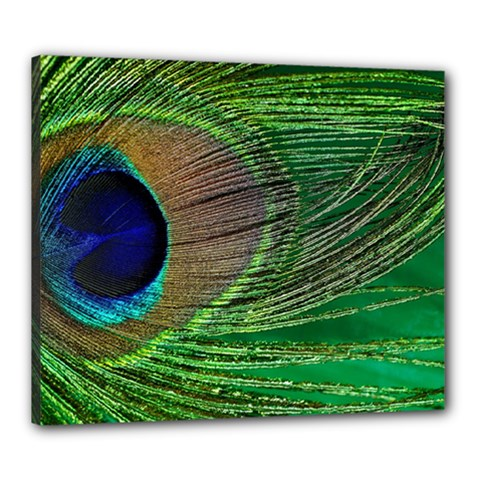 Peacock Feather Macro Peacock Bird Canvas 24  X 20  (stretched)