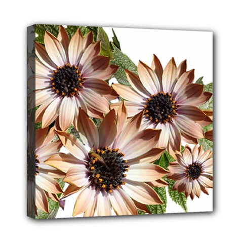 Sun Daisies Leaves Flowers Mini Canvas 8  X 8  (stretched)
