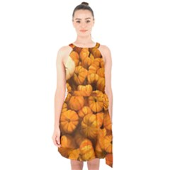 Pumpkins Tiny Gourds Pile Halter Collar Waist Tie Chiffon Dress