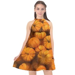 Pumpkins Tiny Gourds Pile Halter Neckline Chiffon Dress
