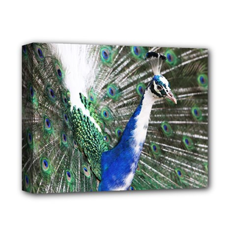 Animal Photography Peacock Bird Deluxe Canvas 14  X 11  (stretched) by Jojostore