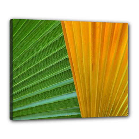 Pattern Colorful Palm Leaves Canvas 20  X 16  (stretched)