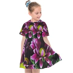 Maroon And White Mums Kids  Sailor Dress