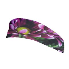 Maroon And White Mums Stretchable Headband