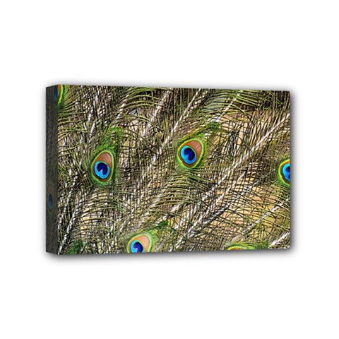Peacock Feathers Color Plumage Green Mini Canvas 6  X 4  (stretched)