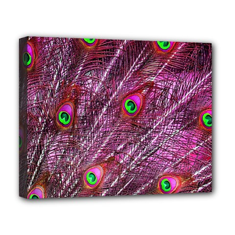 Peacock Feathers Color Plumage Deluxe Canvas 20  X 16  (stretched)
