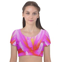Fiery Hot Pink And Yellow Cactus Dahlia Flower Velvet Short Sleeve Crop Top  by myrubiogarden