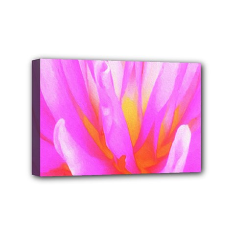 Fiery Hot Pink And Yellow Cactus Dahlia Flower Mini Canvas 6  X 4  (stretched) by myrubiogarden
