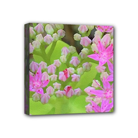 Hot Pink Succulent Sedum With Fleshy Green Leaves Mini Canvas 4  X 4  (stretched) by myrubiogarden