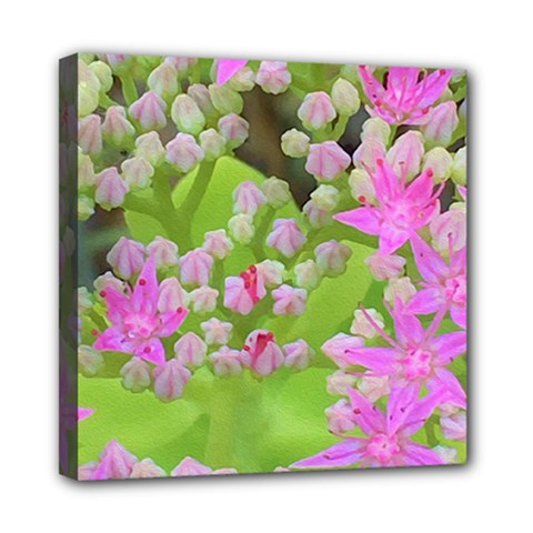 Hot Pink Succulent Sedum With Fleshy Green Leaves Mini Canvas 8  X 8  (stretched) by myrubiogarden