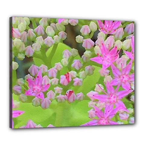 Hot Pink Succulent Sedum With Fleshy Green Leaves Canvas 24  X 20  (stretched) by myrubiogarden