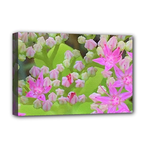 Hot Pink Succulent Sedum With Fleshy Green Leaves Deluxe Canvas 18  X 12  (stretched) by myrubiogarden