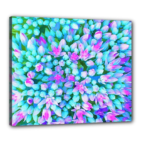 Blue And Hot Pink Succulent Sedum Flowers Detail Canvas 24  X 20  (stretched) by myrubiogarden