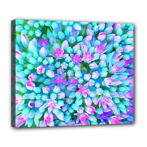 Blue And Hot Pink Succulent Sedum Flowers Detail Deluxe Canvas 24  X 20  (stretched) by myrubiogarden
